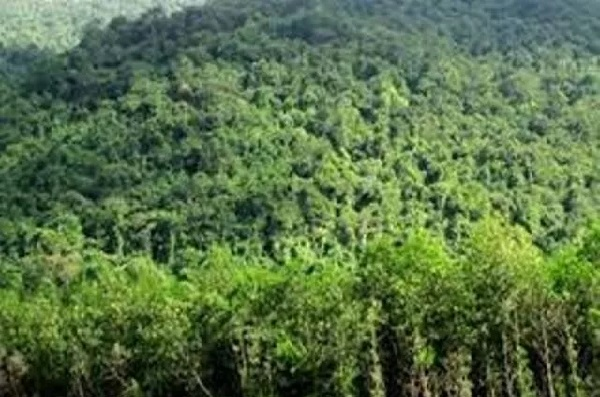 Chỉ thị mới trong công tác quản lý, bảo vệ rừng đặc dụng và rừng phòng hộ