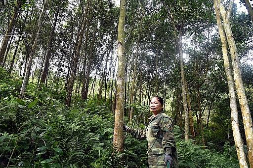 Bắc Kạn là địa phương có độ che phủ rừng cao nhất cả nước