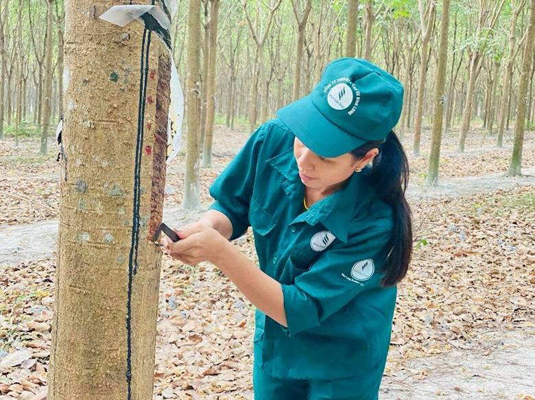 Xây dựng phương án, thực hiện chứng chỉ về quản lý rừng cao su bền vững