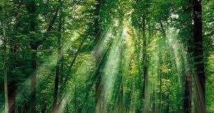 Những người giữ rừng đặc biệt