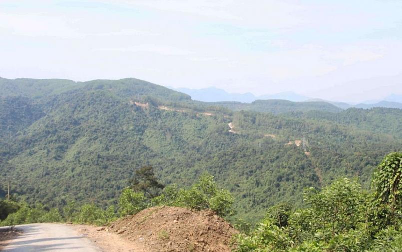 Thừa Thiên - Huế: Tăng cường công tác quản lý và bảo vệ rừng trên địa bàn tỉnh