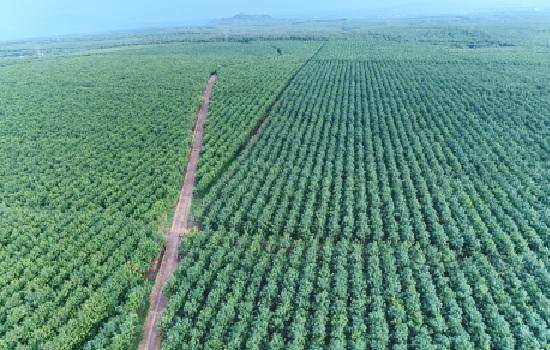TCT cao su Đồng Nai: Đồng hành cùng địa phương và khu vực trong định hướng phát triển bền vững