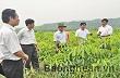 Nghệ An: Quan tâm tháo gỡ khó khăn cho doanh nghiệp trồng cao su