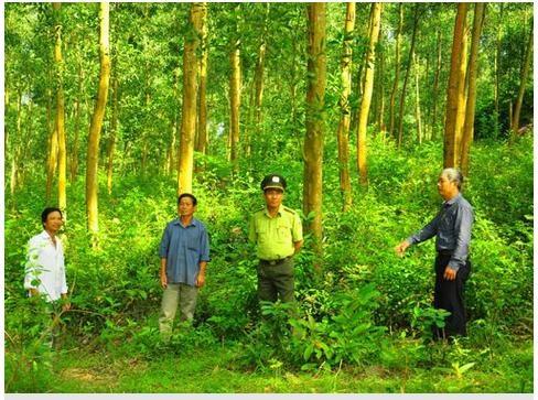 Diện tích trồng rừng tháng 10/2019 giảm