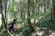 Các Công ty Cổ phần Cao su: Tích cực triển khai dự án trồng rừng thay thế