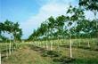 Khen thưởng các CTCS hoàn thành kế hoạch trồng mới cao su tại Campuchia