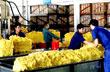 Thị trường Cao su: Tin ngày 28/05/2013