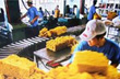Nghịch lý lợi nhuận chuỗi ngành hàng cao su