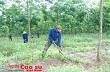 """""""Dự án trồng cao su ở Campuchia có ý nghĩa lớn"""""""