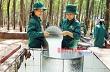 Chào mừng Đại hội Đảng bộ Công ty cổ phần cao su Đồng Phú lần thứ XII, nhiệm kỳ 2015-2020 : Học và làm theo bác ở cao su Đồng Phú