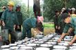 Thanh Hoá: Huyện Thạch Thành khai thác 915 tấn mủ cao su, đạt giá trị 45 tỷ đồng
