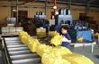 Giá cao su xuất khẩu sụt giảm