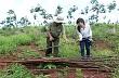 Bình Phước: Triệt phá các vụ chặt hạ cao su trên địa bàn huyện Bù Đăng