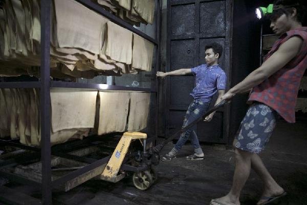 Ngành cao su Thái Lan điêu đứng vì kinh tế Trung Quốc giảm tốc