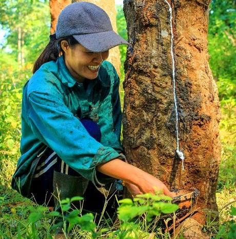 4 giải pháp căn cơ để cao su phát triển bền vững
