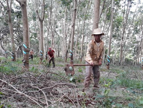 Mủ cao su bất ngờ quay đầu giảm mạnh, thủ phủ Bình Phước trầm lắng