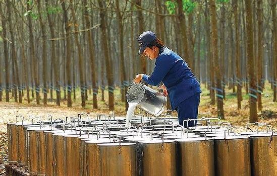 DPR: Cổ đông chất vấn kế hoạch giá bán mủ cao su thấp