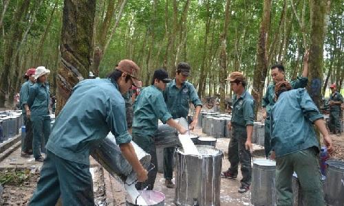 Cao su Đồng Phú thực hiện 73% kế hoạch lãi gộp trong 4 tháng
