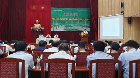Phát triển bền vững cao su Việt Nam: 'Đừng thấy khó mà bỏ'