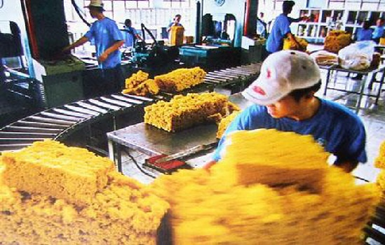Giá cao su xuất khẩu lao dốc