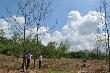Vườn cây ảnh hưởng nắng hạn, khó hoàn thành kế hoạch