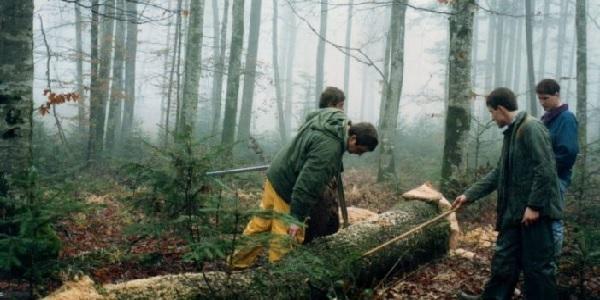 Nhu cầu gỗ tại châu Á thúc đẩy Nhật Bản đầu tư sang New Zealand