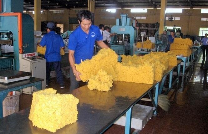 Nghịch lý của cao su nguyên liệu Việt