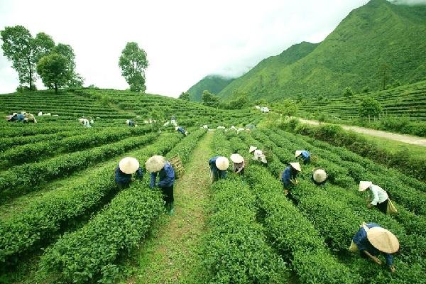 Ngành nông nghiệp đạt nhiều mục tiêu tăng trưởng