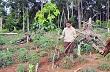 Chuyển đổi rừng nghèo sang trồng cao su ở Gia Lai còn nhiều bất cập