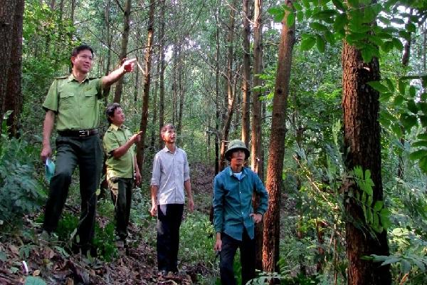 Nhiều quy định mới về khu du lịch sinh thái trong rừng