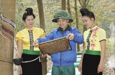 Cao su Sơn La: Tạo việc làm, tăng thu nhập cho người dân