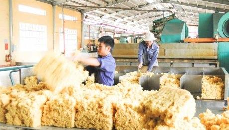 Giải pháp nâng cao chất lượng sản phẩm cao su SVR 10