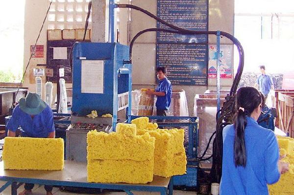 Trong khi nhiều thị trường giảm xuất khẩu, cao su Việt Nam vẫn tăng thị phần tại Ấn Độ