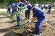 Công ty TNHH MTV Cao su Dầu Tiếng: Ra quân trồng mới tái canh trên 1.600 ha cao su