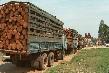 Mỗi năm Việt Nam nhập 4,5 triệu m3 gỗ từ 100 quốc gia trên thế giới