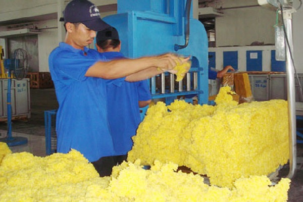 Giá tăng, cao su xuất khẩu tháng 10 tăng gần 20% về giá trị